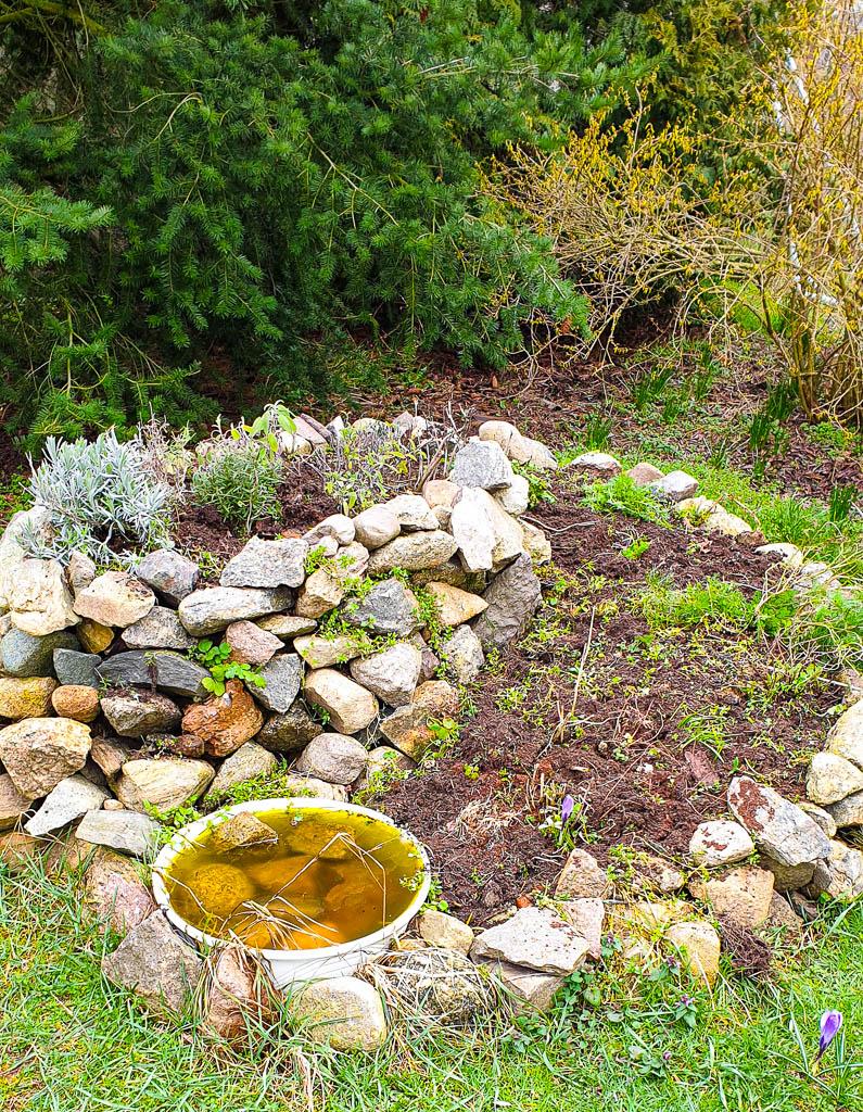 Pflanzen nach dem Winter vom Balkon in den Garten pflanzen - Alte Pflanzen auspflanzen